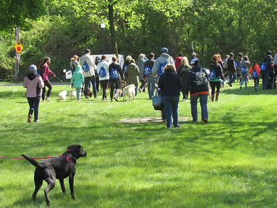 At 11am, attendees began the Mutt Strut on Monroe St.