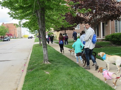 Participants walked along Garrison St. as part of the Mutt Strut.