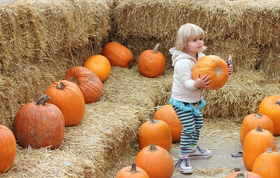 Courtney Arakelian, 2, of Dearborn picks out a pumpkin Oct. 29 at the Dearborn Fire Safety House Pumpkin Patch.