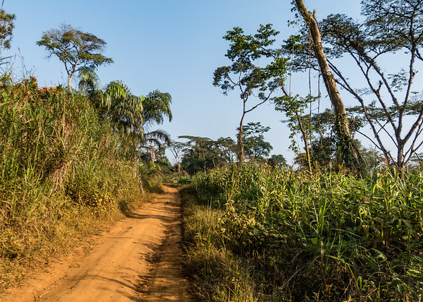 dirt road from Nyasoso to Bangem, Southwest Region, Cameroon Africa