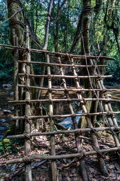 Rope bridge over stream on trail from Bangem to Bermin, Southwest Region, Cameroon Africa