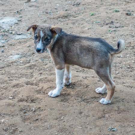 """chop chop"" the puppy. Nyasoso, Southwest Region, Cameroon Africa"