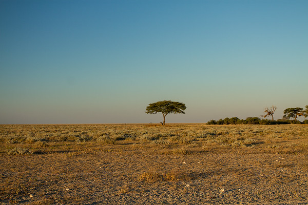 Etosha N.P., Oshana Namibia