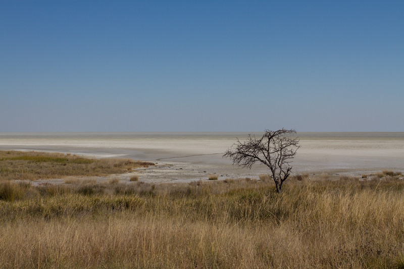 Etosha N.P., Oshikota Namibia