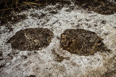 African elephant foot prints. Khaudum N.P., Kavango Namibia