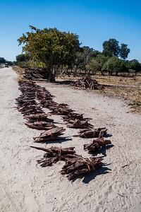 mopane wood, Colophospermum mopane (Fabaceae). Kwando, Kavango Namibia