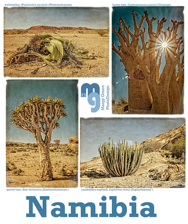 Namibia Fine Art Plants2