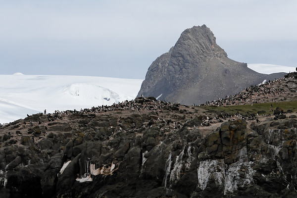 Chinstrap Penguin, Pygoscelis antarctica. Aitcho Islands, South Shetland Islands, Antarctica