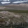 chinstrap & gentoo penguins, <i>Pygoscelis antarcticus</i> & <i>Pygoscelis papua</i> (Spheniscidae). Aitcho Islands, South Shetland Islands Antarctica
