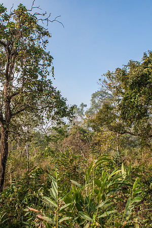 Kaziranga National Park, Tezpur, Assam India