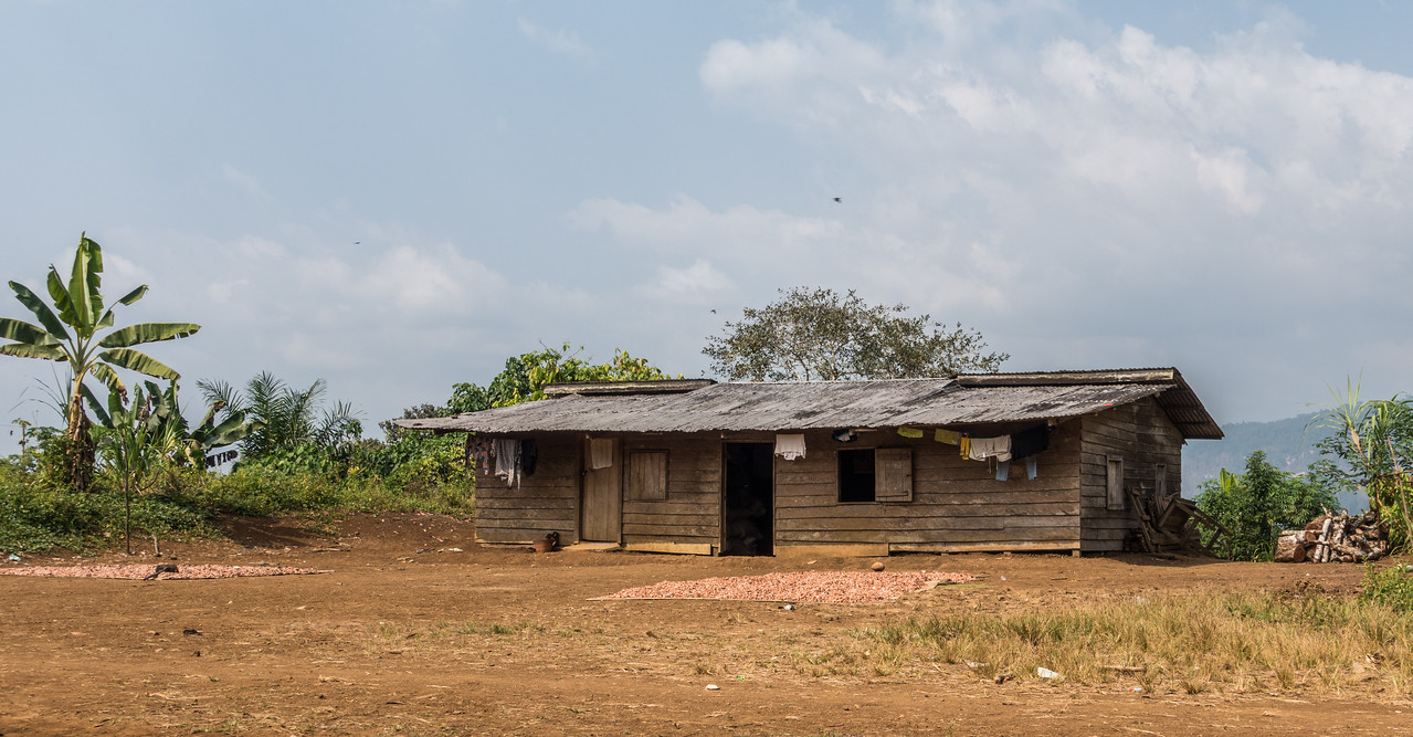 Typical house with drying cocoa beans, Theobroma cacao (Malvaceae). Bermin, Southwest Region, Cameroon Africa