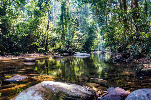 Stream on trail  from Bangem to Bermin, Southwest Region, Cameroon Africa