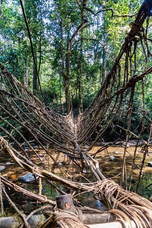 Rope bridge over stream on trail from Bangem to Bermin, Southwest Region, Cameroon Africa