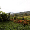 view from Yanayacu Center for Creative Studies. Cosango, Napo Ecuador