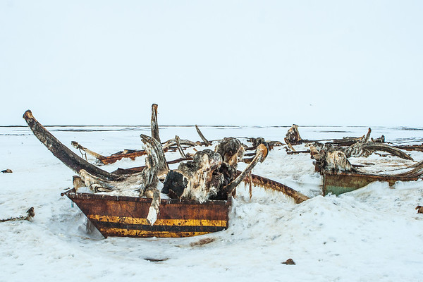 Bone Pile. Point Barrow, Barrow Alaska USA