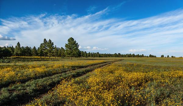 Mud Lake, Coconino National Forest, Coconino County, Arizona USA