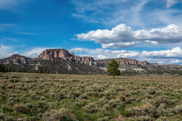 Dixie National Forest, Garfield County, Utah USA