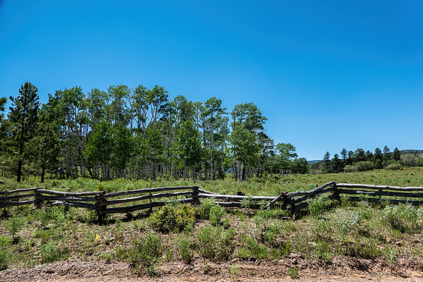 Road to McGath Lake, Dixie National forest, Garfield County, Utah USA