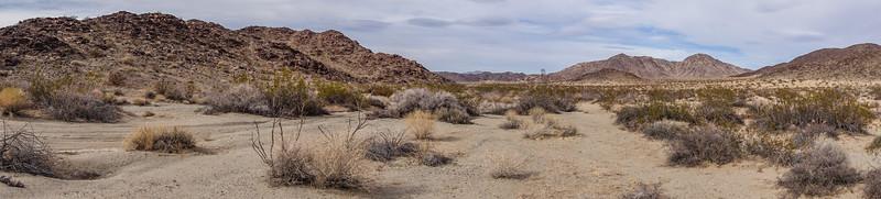 Colorado Desert, Pinto Mountains, Riverside Co. California USA