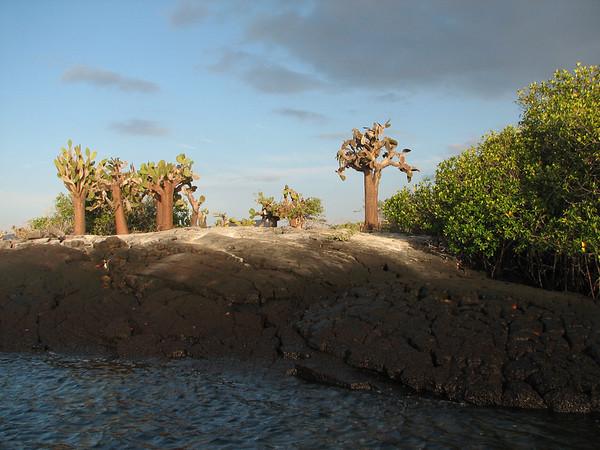 - Floreana - Galapagos Islands - Ecuador - ©2006 Margy Green
