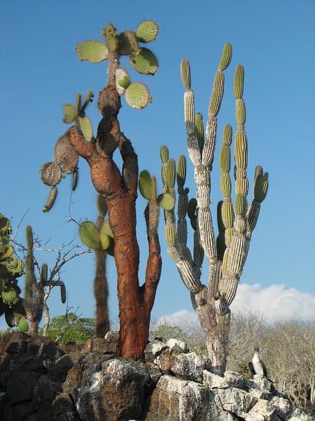 Islets of Venecia (Cerro Dragon), Santa Cruz, Galapagos Islands Ecuador