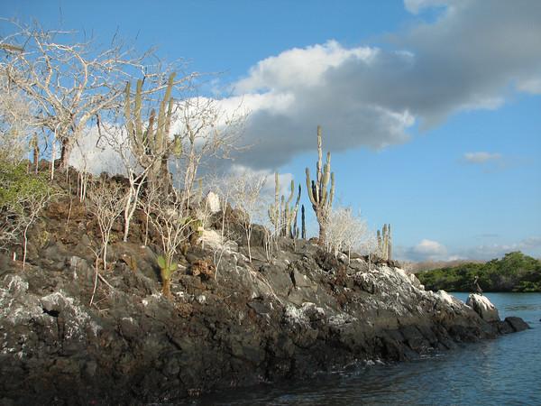 - Islets of Venecia (Cerro Dragon), Santa Cruz - Galapagos Islands - Ecuador - ©2006 Margy Green