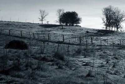 Sonoma fields at dawn