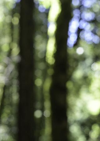 el corte madera open space