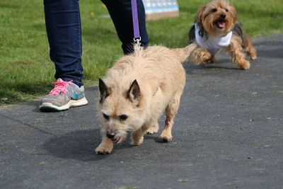 Pets and their human companions were out on the island for the charity fun run Saturday morning.