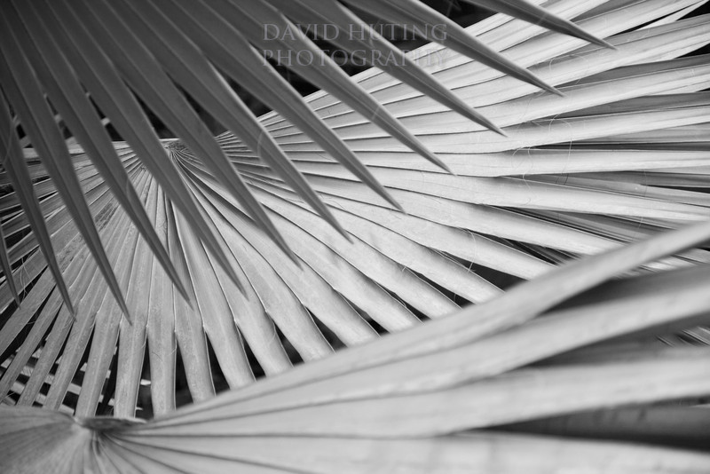 Palm Leaves B&W