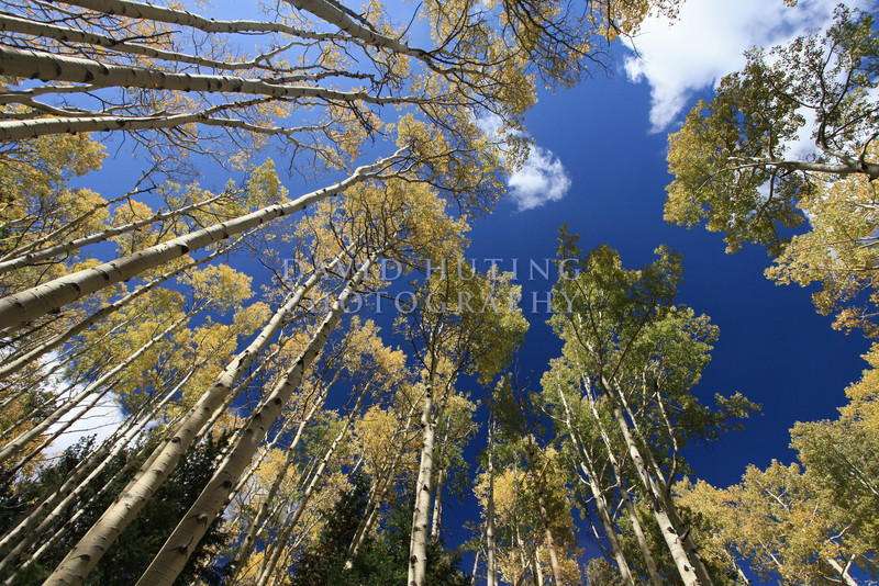 Wideangle Aspen Skies