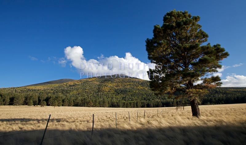 Tree View - Yellow Mountain Cropped