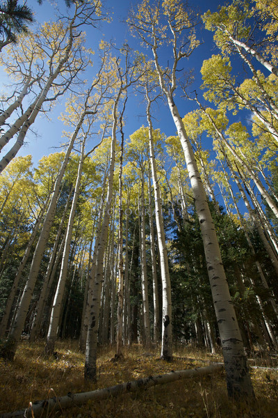Aspen View Wideangle Vertical