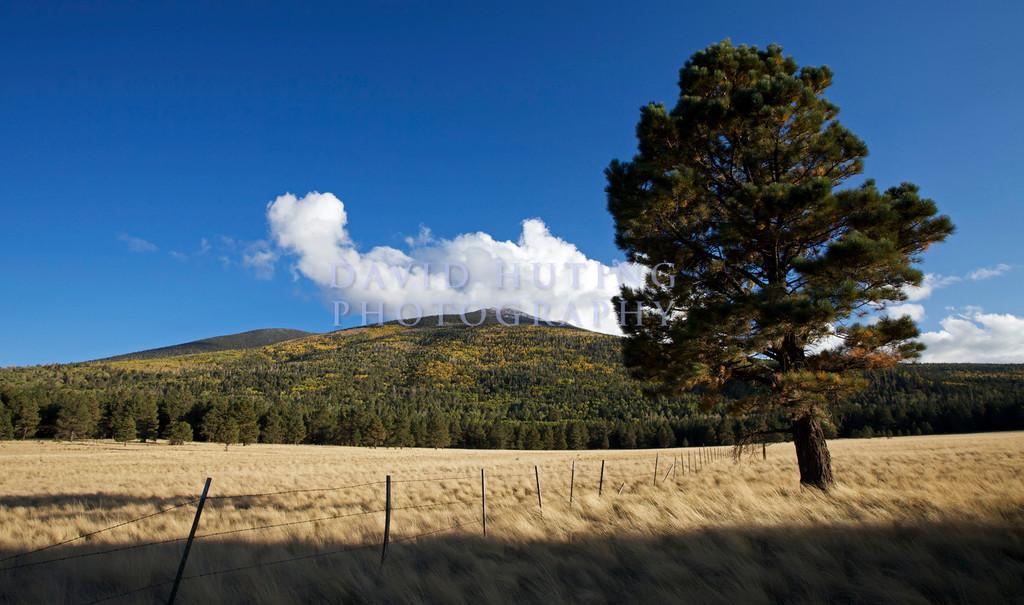 Tree View - Yellow Mountain Croppedc