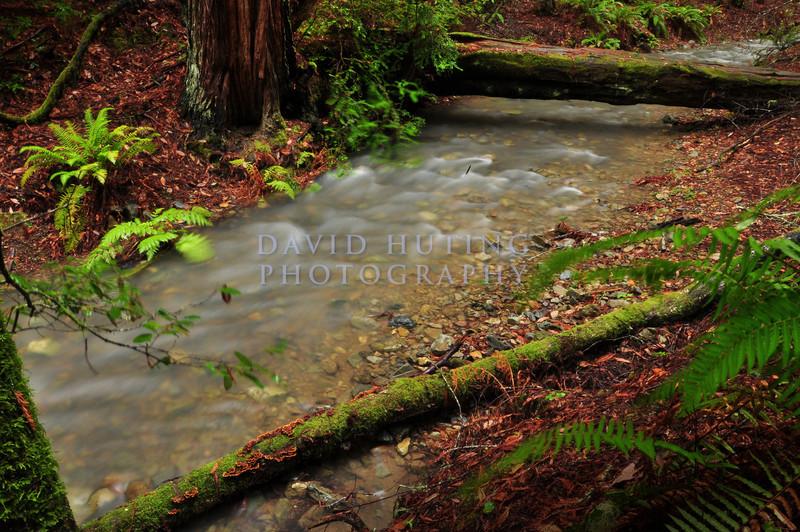 Colorful Creek Flowing<br /> Muir Woods, CA