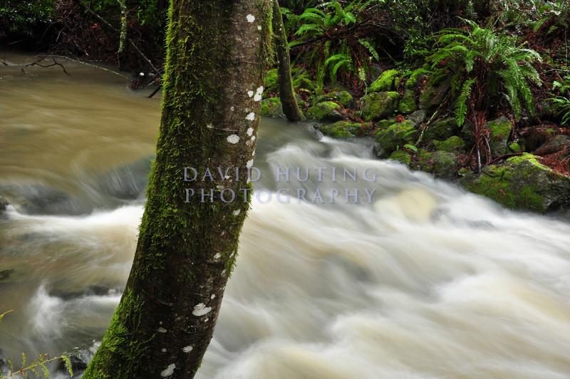 Flowing Creek in Muir Woods
