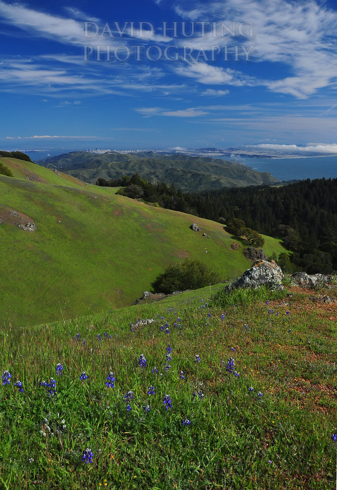 Colorful Spring View of San Francisco