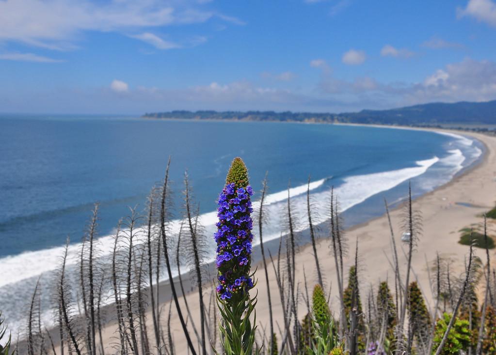 One Purple Flower<br /> (Stinson Beach View)