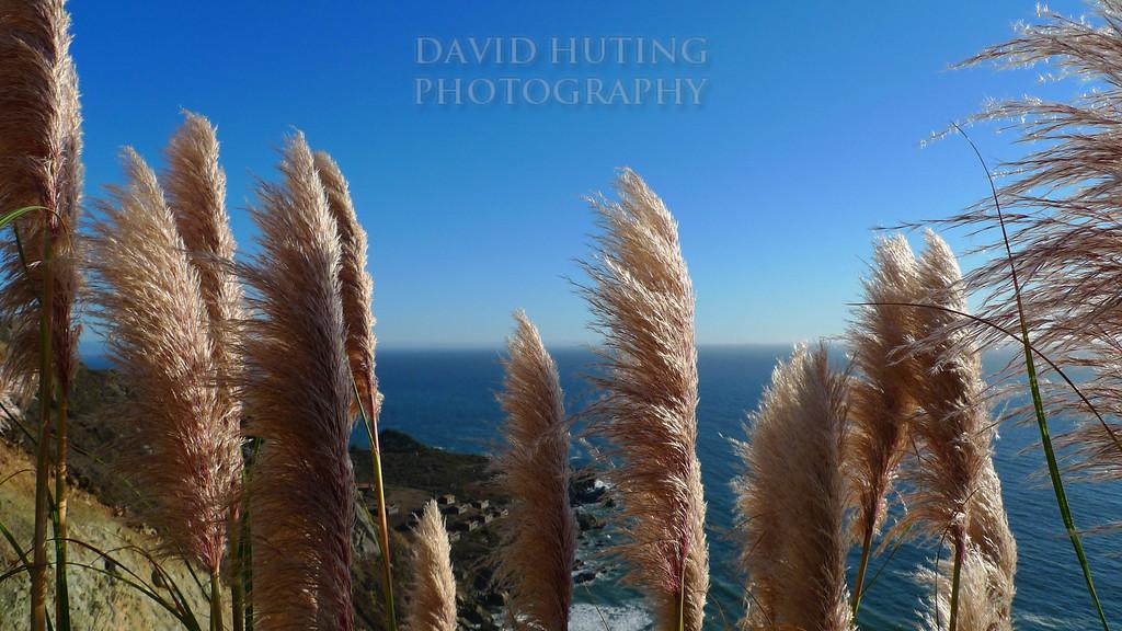 Coastal California Wildflowers