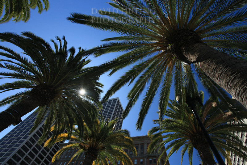 SF Palms