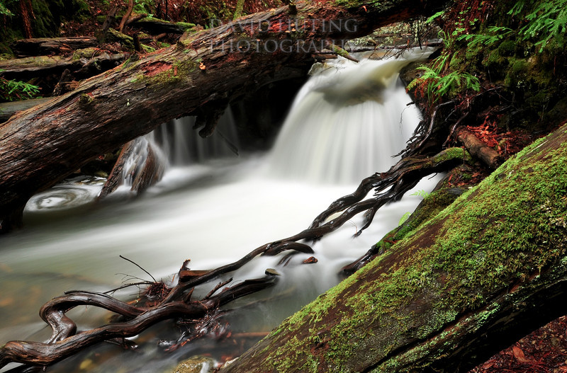 Flowing Falls of Fern Creek<br /> Muir Woods, CA