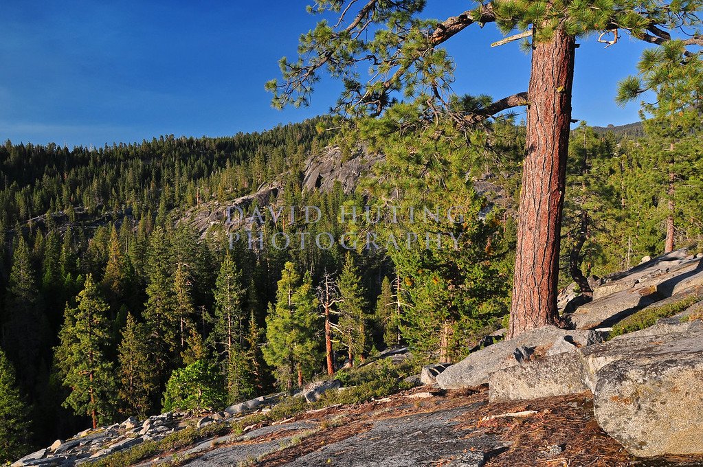 Colorful Pine Lookout View