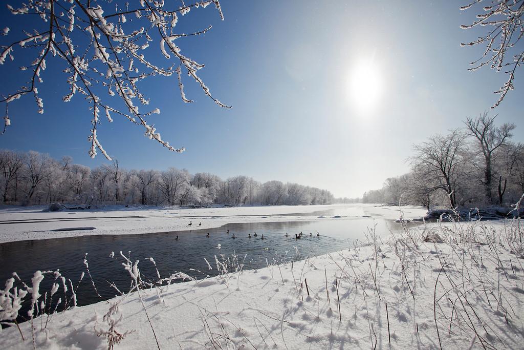 Snowy sunny cedar