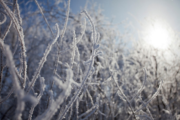 Frosty twigs