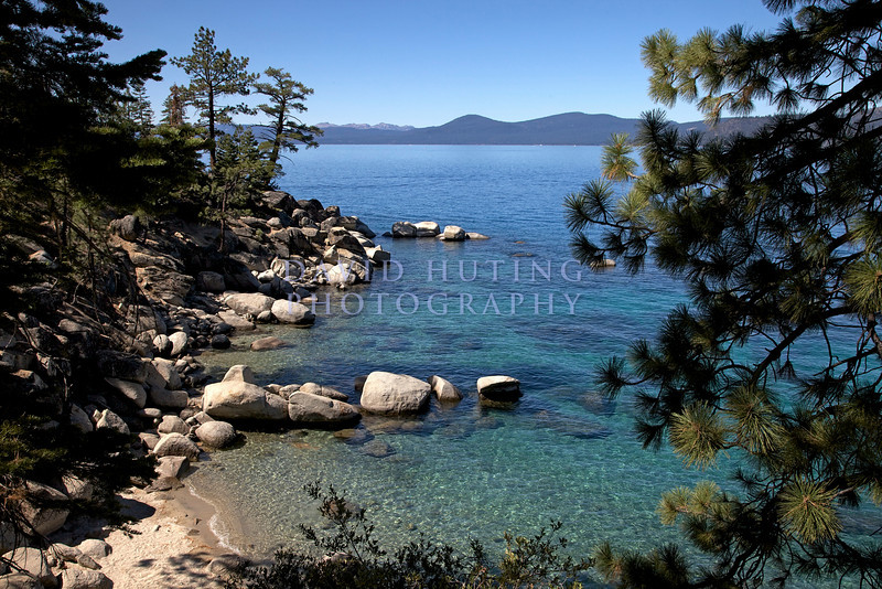 Tahoe Beach Pine Tree View