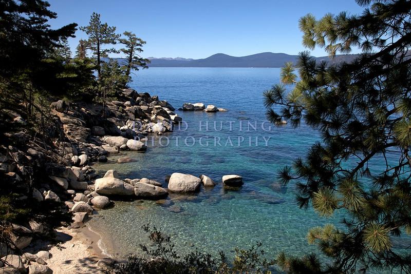 Tahoe Beach Pine Tree View
