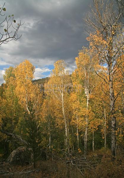 Autumn Trees Sunshine - Rebel