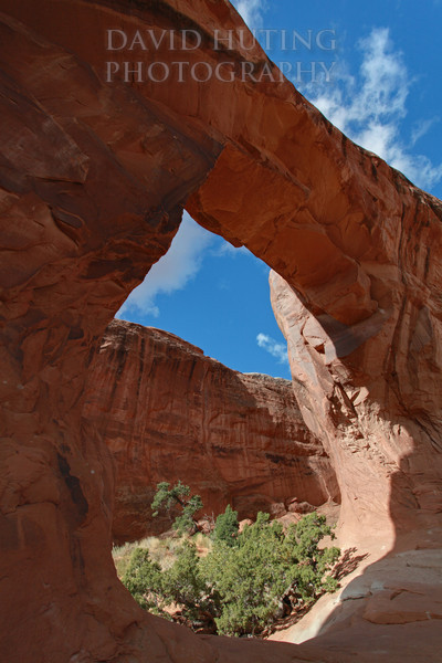 Double Arch Vertical EB