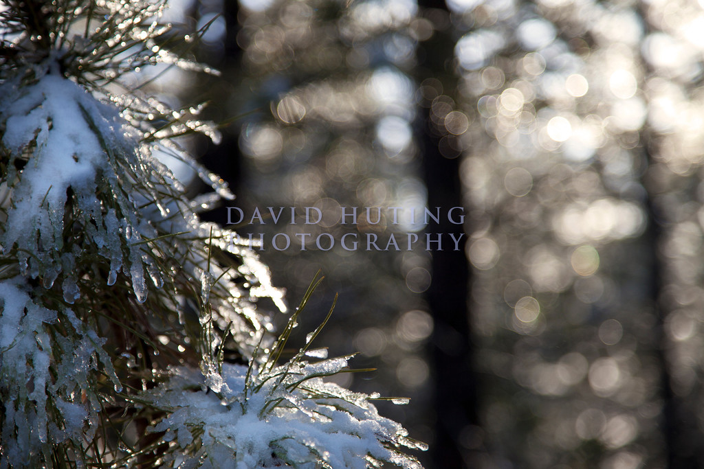Golden Droplets of Melting Snow Fall in the Forests of Bryce Canyon