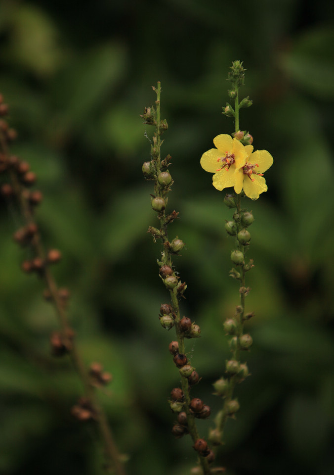 Tight Yellow Flowers